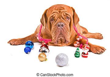 Big Dog is Playful on Christmas Eve