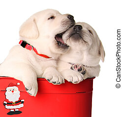 Playful Christmas puppies