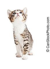 Playful Curious Kitten Looking Up