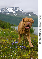 Playful dog against Norwegian landscape