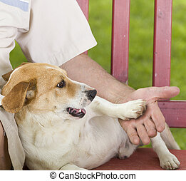 Playful dog - Cute dog playing with his owner hand