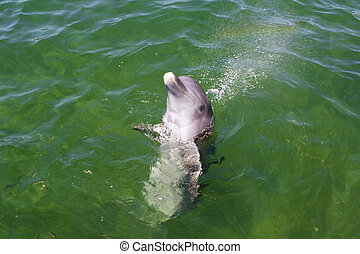 Playful dolphin in the water. Close-up