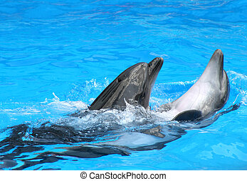 Playful dolphin with friend in blue water