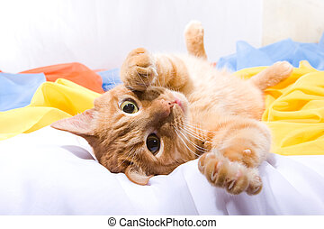 Playful foxy cat lying on the colorful textiles. Soft-...