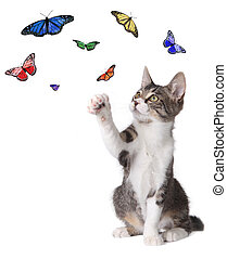 Kitten Batting at Butterflies - Playful Kitten Batting at...