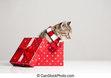 Playful little ktten. - Shot of playful little kitten with...