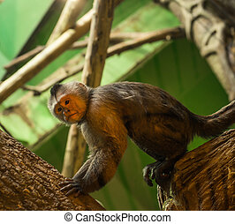 playful monkey in enclosure