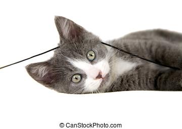 Playfull kitten - Cute grey kitten lying with a string of...