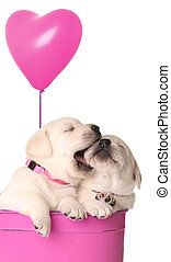Playfull puppies - Valentine puppies and pink heart balloon.