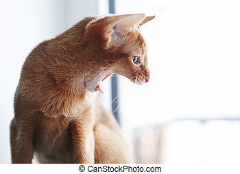 Playfull small red cat.Close-up image of adorable cat