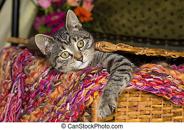 Playfull young cat is looking out of a basket.