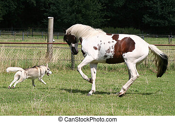 playing dog and horse
