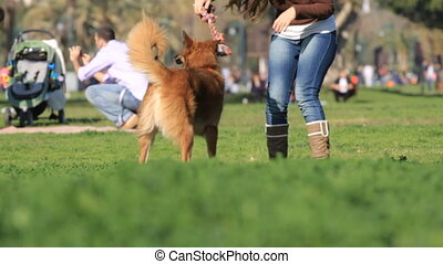 Woman and dog playing in the park.