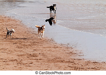 Playing dogs on the beach