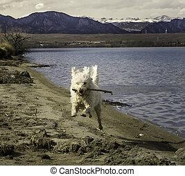 Playing Fetch at Stanley Lake