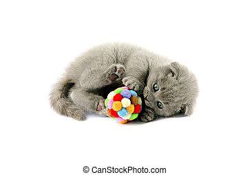 playing kitten with a ball