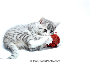 playing young cat with red wool ball