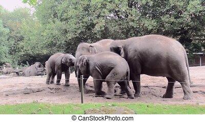 Playing young elephants.