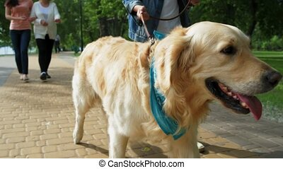 Pleasant boy holdign his dog on the lead - My friend. Nice...