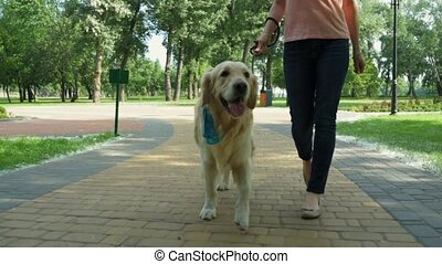Pleasant sporty woman walking in the park with her dog