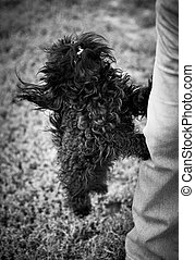 Please hold me in your arms! ( black and white photo) - ...