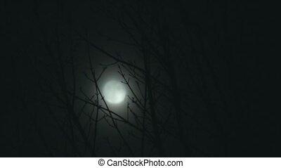 pleine lune, arbres, nuit