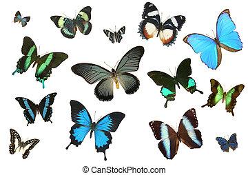 Plenty of Butterflies 2