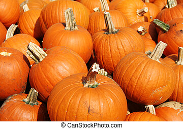 Plenty Of Pumpkins - Many bright orange pumpkins ready for...