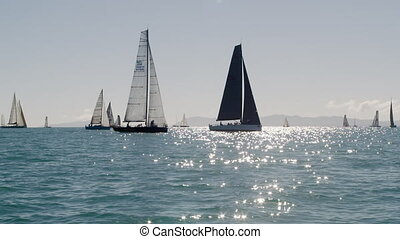 Plenty of sailboats sailing the sea - A wide shot of...