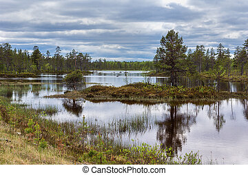 Plenty of water creates islets in marshlands in between higher lying patches filled with trees and other vegetation.