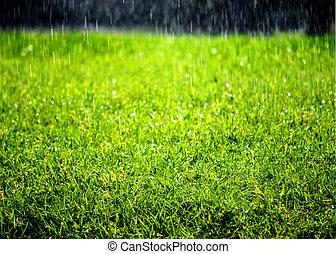 pleuvoir, pelouse, vert