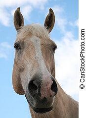 plezier, paarde