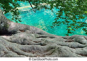 plitvice, 克羅地亞, 國家公園, 湖