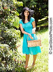 plockning, kvinna, litchiplommon, fruktträdgård, ung