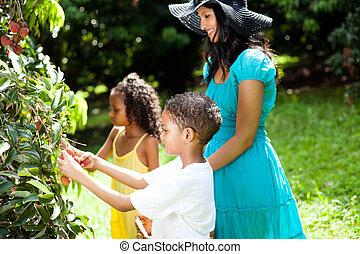 plockning, lycklig, litchiplommon, familj, utomhus