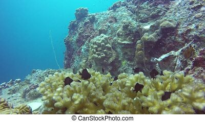 plongée, corail, hobby., école, extrême, écosystème, ...