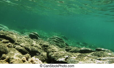 plongée, fish, scaphandre, sous-marin