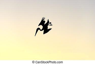 plongée, pélican, silhouette, oiseau, isolé