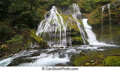 plonger, ruisseau, wa, panthère, chutes, eau, état, audio, ...