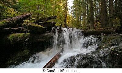 plonger, ruisseau, wa, panthère, chutes, eau, état, sons, ...