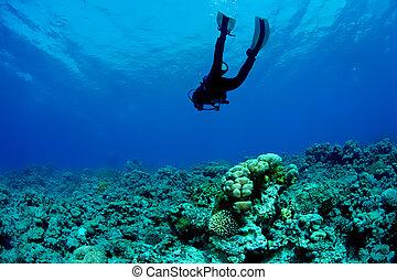 plongeur sous-marine, et, récif corail