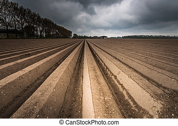 plough agriculture field after sowing - open farmland after...