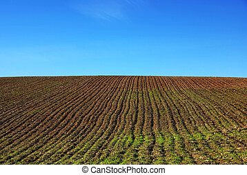 ploughed field and blue sky