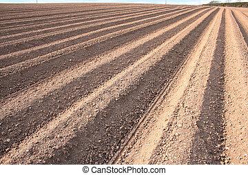 Ploughed furrows in farmers potato field