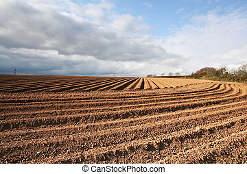 Ploughed Field Furrows - Ploughed furrows in farmers potato...
