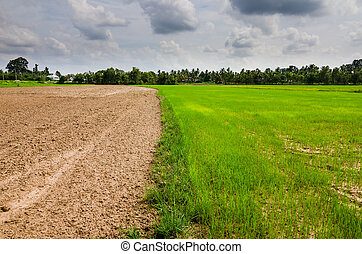 Ploughed field in the rice field in countryside view ...