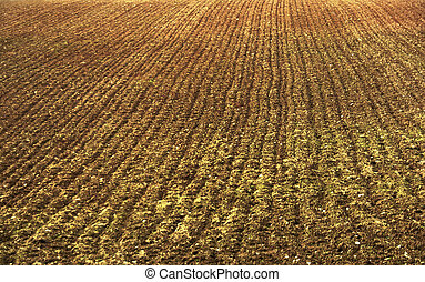ploughed field texture