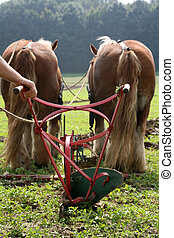 Ploughing team - Two brown horses with a traditional plough