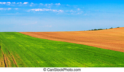 Plowed and sown fields in the spring. Farmlands, agriculture