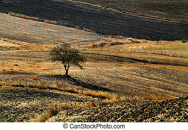 plowed autumn fields in rural Andalucia